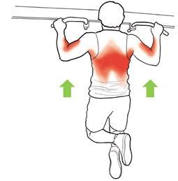 Pathologies de l'épaule en musculation fig4