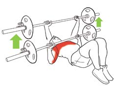 Pathologies de l'épaule en musculation fig5
