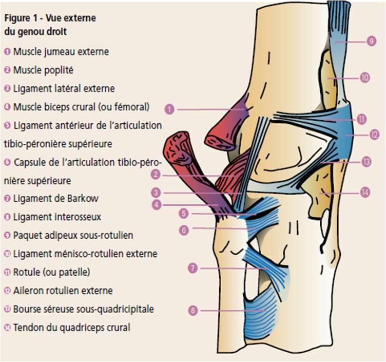 Un geste simple l examen du ligament collat ral for Douleur au genou gauche interieur
